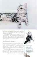 Все о кошках — фото, картинка — 15