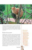 Все о кошках — фото, картинка — 5