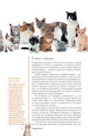 Все о кошках — фото, картинка — 6
