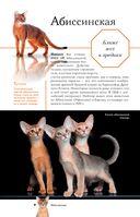 Все о кошках — фото, картинка — 8