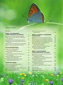 Красная книга. Бабочки, жуки и другие насекомые — фото, картинка — 1