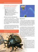 Красная книга. Бабочки, жуки и другие насекомые — фото, картинка — 10