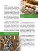 Красная книга. Бабочки, жуки и другие насекомые — фото, картинка — 2