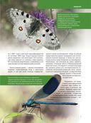 Красная книга. Бабочки, жуки и другие насекомые — фото, картинка — 5