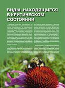 Красная книга. Бабочки, жуки и другие насекомые — фото, картинка — 6