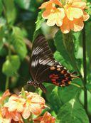 Красная книга. Бабочки, жуки и другие насекомые — фото, картинка — 7