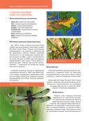 Красная книга. Бабочки, жуки и другие насекомые — фото, картинка — 8