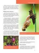 Красная книга. Бабочки, жуки и другие насекомые — фото, картинка — 9