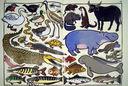 Такие разные животные — фото, картинка — 1