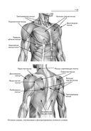 Лечебные упражнения для плечевых суставов — фото, картинка — 10