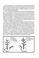 Энциклопедия садовода и цветовода для новичков в понятных рисунках и схемах — фото, картинка — 11
