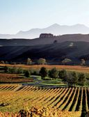Мир вина. Вина, сорта, виноградники — фото, картинка — 2