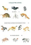 Моя первая зоология — фото, картинка — 1